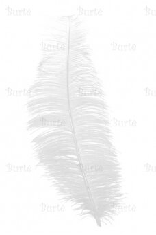 Balta plunksna