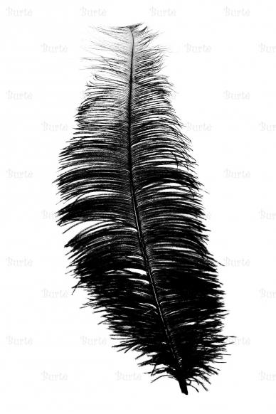 Чёрное перо
