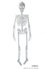 Skeletas 150cm